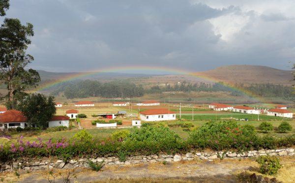 חווה ווטרינרית לאחר הגשם